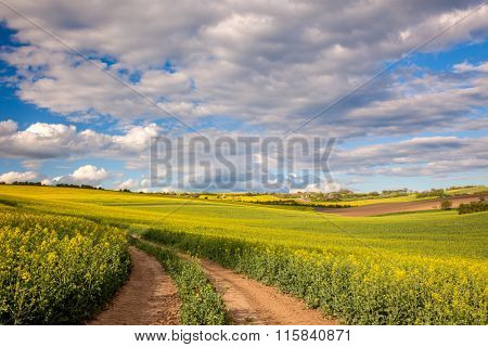 Yellow flowering fields and ground road overlooking a valley, rural spring landscape