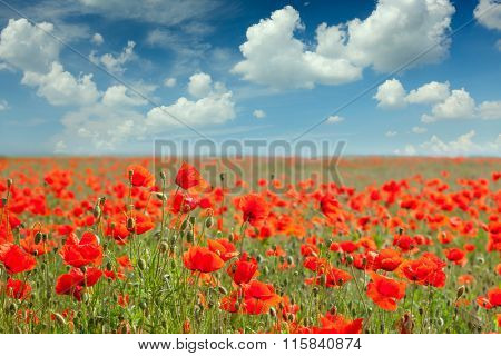 Fantastic background of Summer poppy field landscape with blue sky and clouds