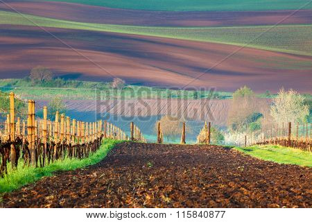 Fields and Vineyards, beautiful countryside landscape, spring time