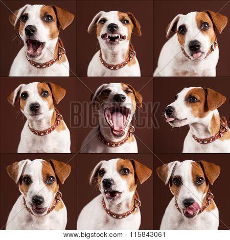 Emotional dog. Fun puppy. collage
