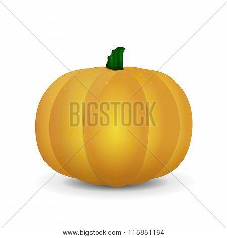 Orange Isolated Pumpkin In Vector
