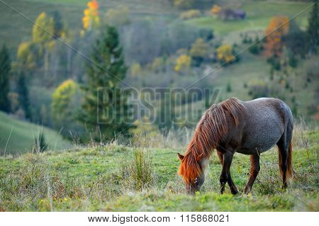 Horse Grazing In The Mountains