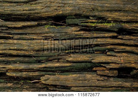 Wood Textured Background With Green Moss