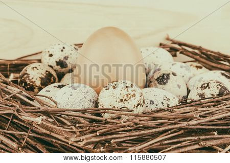 Small quail eggs and big hen's egg in nest