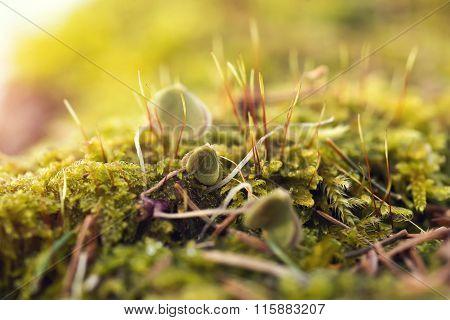 Moss In Close-up Shot