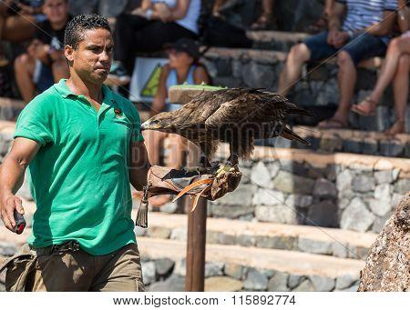 LA LAJITA FUERTEVENTURA SPAIN - SEPTEMBER 11 2015: Bird of Prey Show Oasis Park Fuerteventura Canary Island Spain