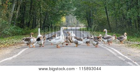Goose Flock (group)