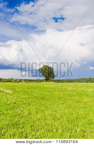 Field Landscape Grass Land