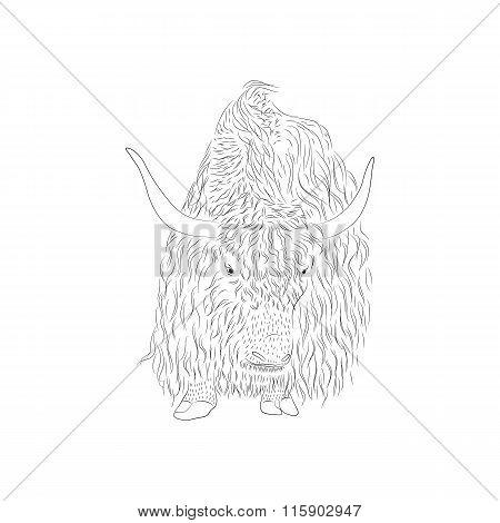 Bizon. Large Horned Mammal. A Wild Animal.