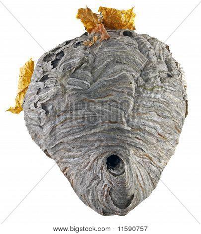 Hornet Nest Leaves White Background