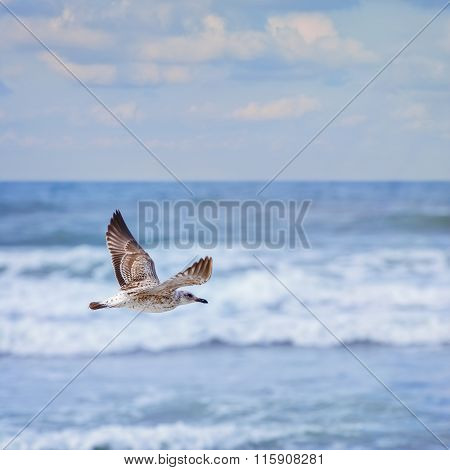 Flying Young Seagull