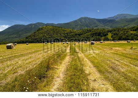 Country Landscape In Piedmont