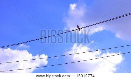 Bird On The Power Line