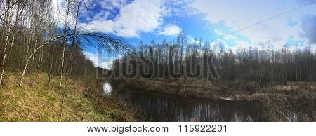 The river in the spring wood a birch bent over water