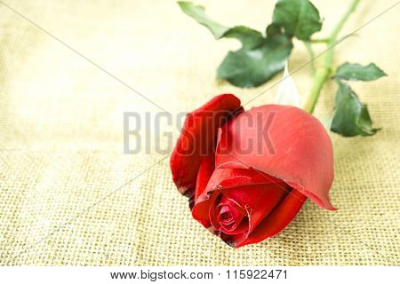 Red Rose On Sackcloth