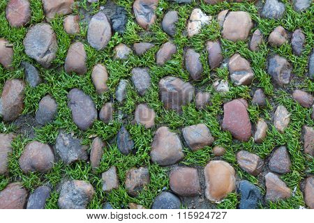 Green grass growing through the cobbled pavement in Seville, Andalusia, Spain. Background texture.