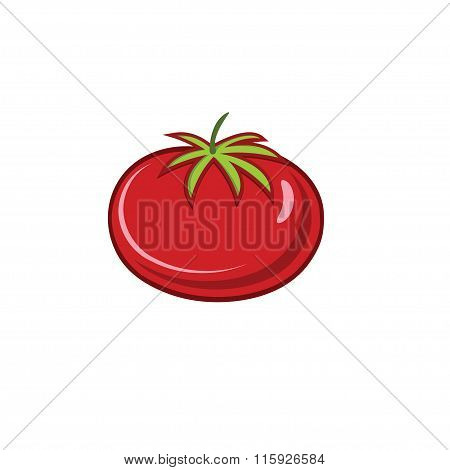 Red Ripe Tomato Vector Illustration Isolated On White Backgroud