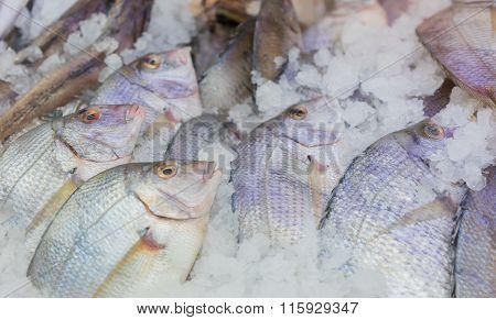 Fresh Whole Fish