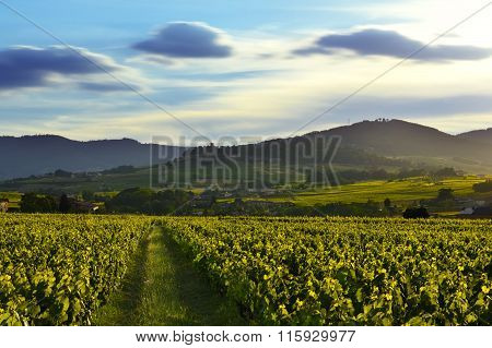 Sunset Lights Over Vineyards And Mountains, Beaujolais, France