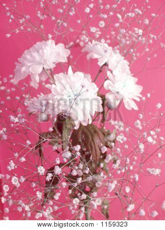 Flores blancas en Rosy