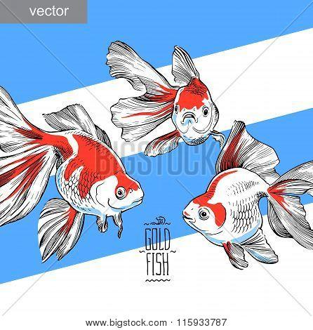 Goldfish illustration artwork  line underwater color vector