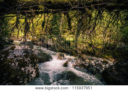 Deep forest and river wild nature Landscape