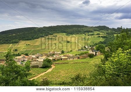 Vineyard Of Solutré Village, Bourgogne, France