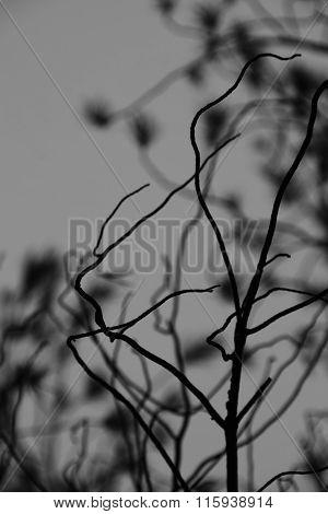 Tree Branches Gray Sky