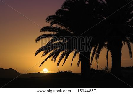 Tropic coconut palm tree silhouette at sunset as a background