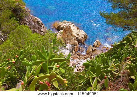 Costa Brava beach Lloret de Mar in Catalonia Cala Banys at Spain