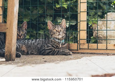 Young Tabby Cat Lying In Garden In Front Of Fence.