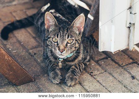Young Tabby Cat Lying On Floor In Open Door. High Angle View.