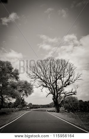 Vanishing road and an aged tree silhouette. Black and white artistic image.
