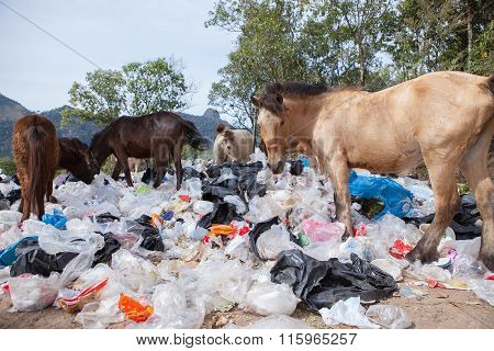 Flock Of Wild Horse And Pastic Garbage In Natural Field