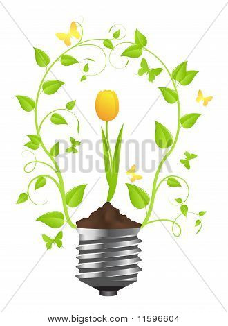 Bulb With Plant Of Tulip