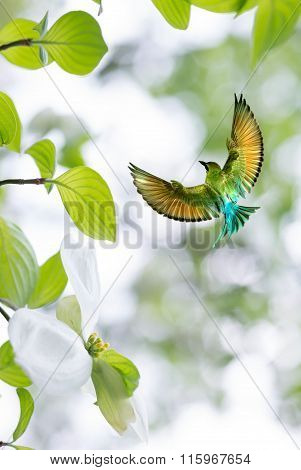 Bird In Flight Against Bright Sky Spring Concept