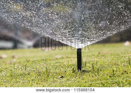 Sprinkler Head Watering In Park.