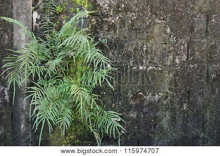 Fern On Wall