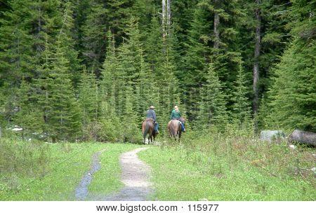 Wilderness Horse Riding