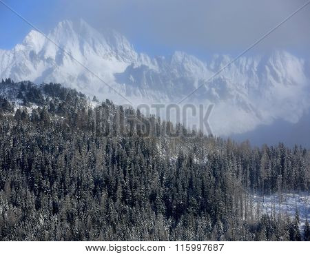 winter forest against big mountains background