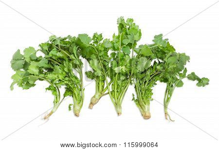 Several Stalks Of Coriander On A Light Background