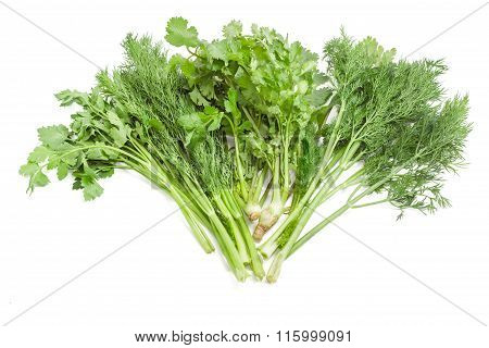 Bundle Of Dill, Coriander And Parsley On A Light Background