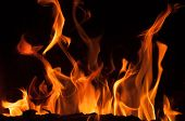 Fire flames on a black background. Blaze fire flame texture background. Close up of fire flames isol poster