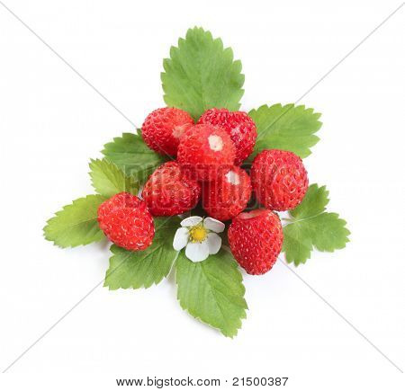 Wild strawberries heap with green leaves and flower isolated on white