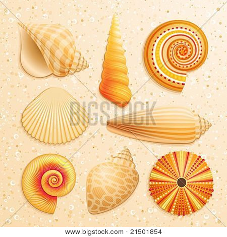 Seashell collection on sand background. Vector illustration.