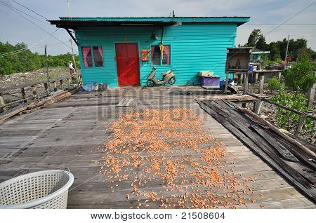 drying shrimp under the sun in the fishing village