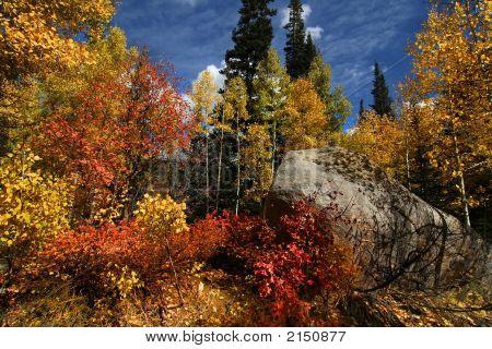 Fall Colors 2