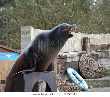 Performing Seal