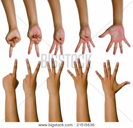Set Of Woman Counting Hands