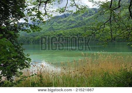forest  Lake Fuschlsee, Austria